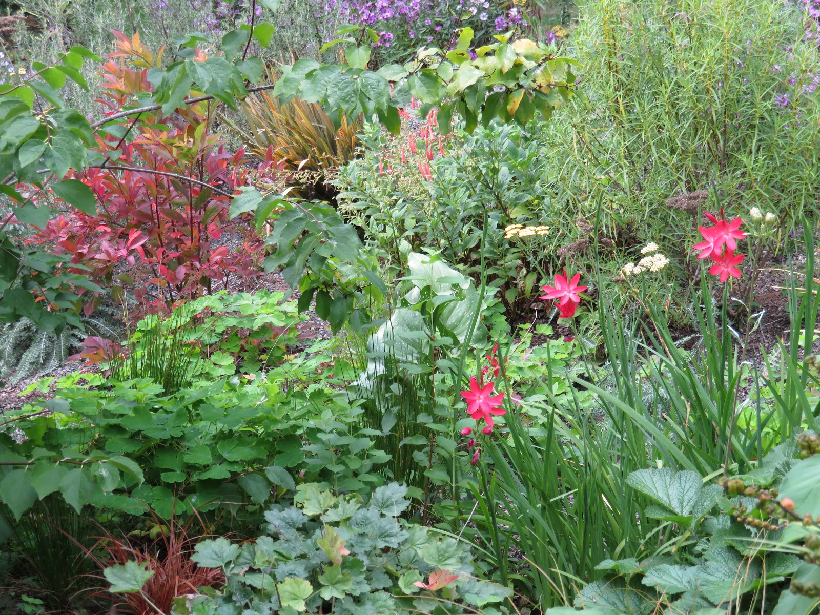 Early Autumn At Chickadee Gardens