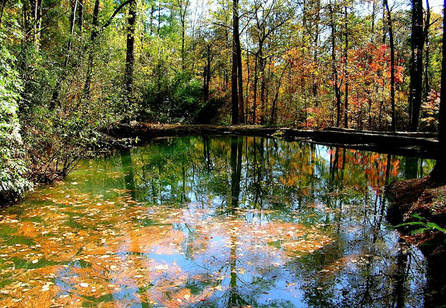 Fall foliage surrounds this hidden pond area in a remote location on the grounds of Berry College in Rome, Georgia.