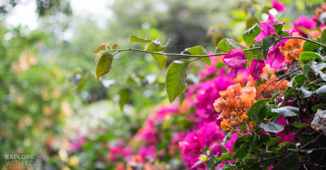 Funchal flower garden