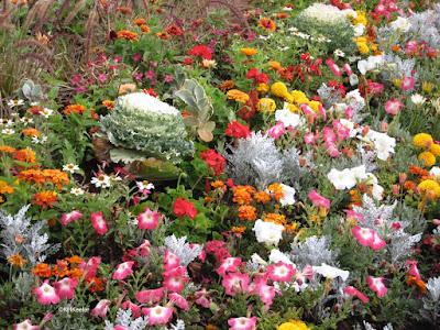 Flowers! Yampa River Botanic Park