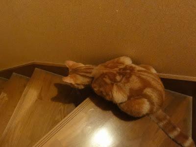 猫が自分の影とにらめっこをしています。