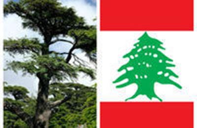 Misteri Pohon Cedar,Pohon Magis yg Ada di Bendera Lebanon