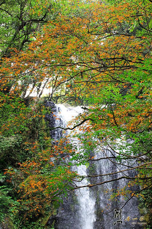 雲森瀑布楓紅