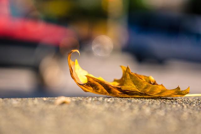 Bagaglio per viaggiare in autunno
