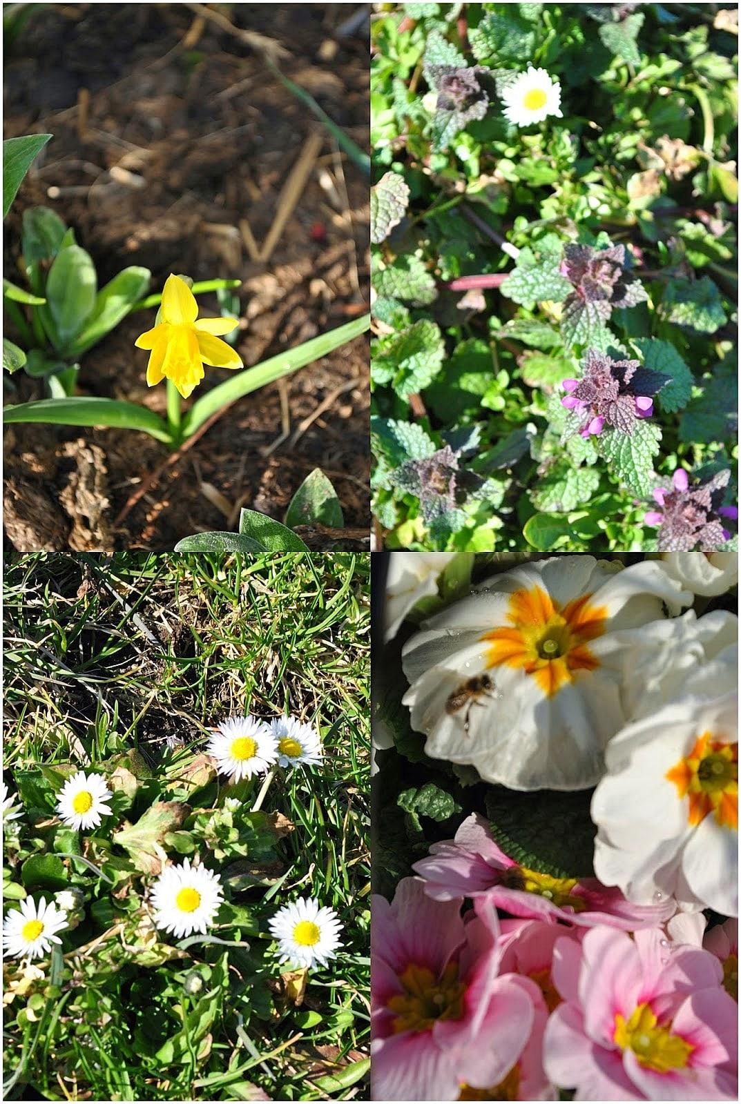 Frühlingserwachen in Haus, Garten und Stall.