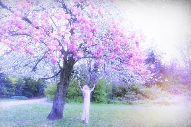 cherry blossoms peckham park