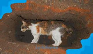 Arti Mimpi Melihat Kucing Mati Menurut Primbon Jawa