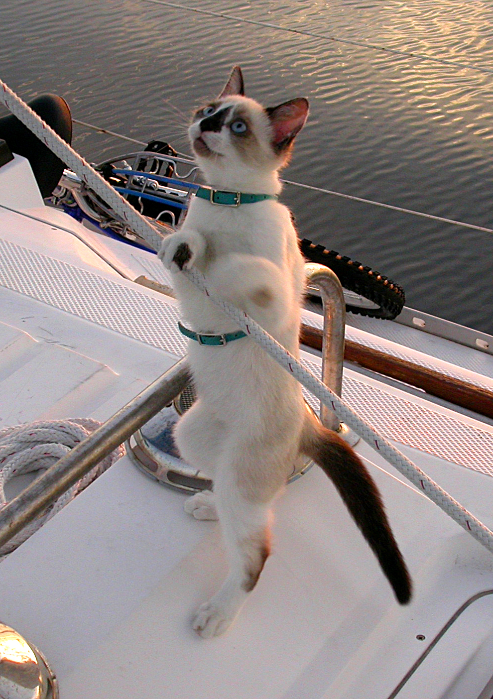 Sailor Cat by dongato from flickr (CC-NC-ND)