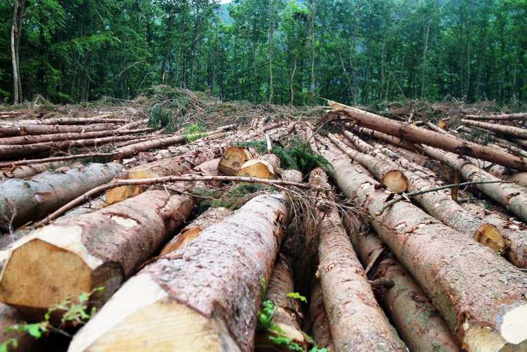 Norway Becomes First Nation In The World To Ban Deforestation