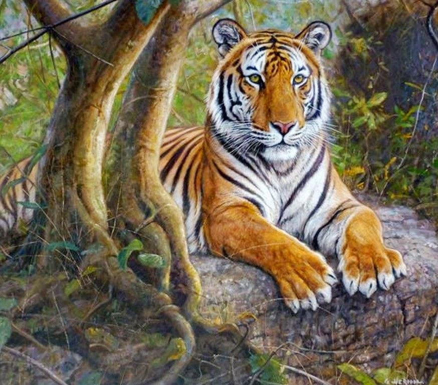 Cuadros Pinturas Arte Animales
