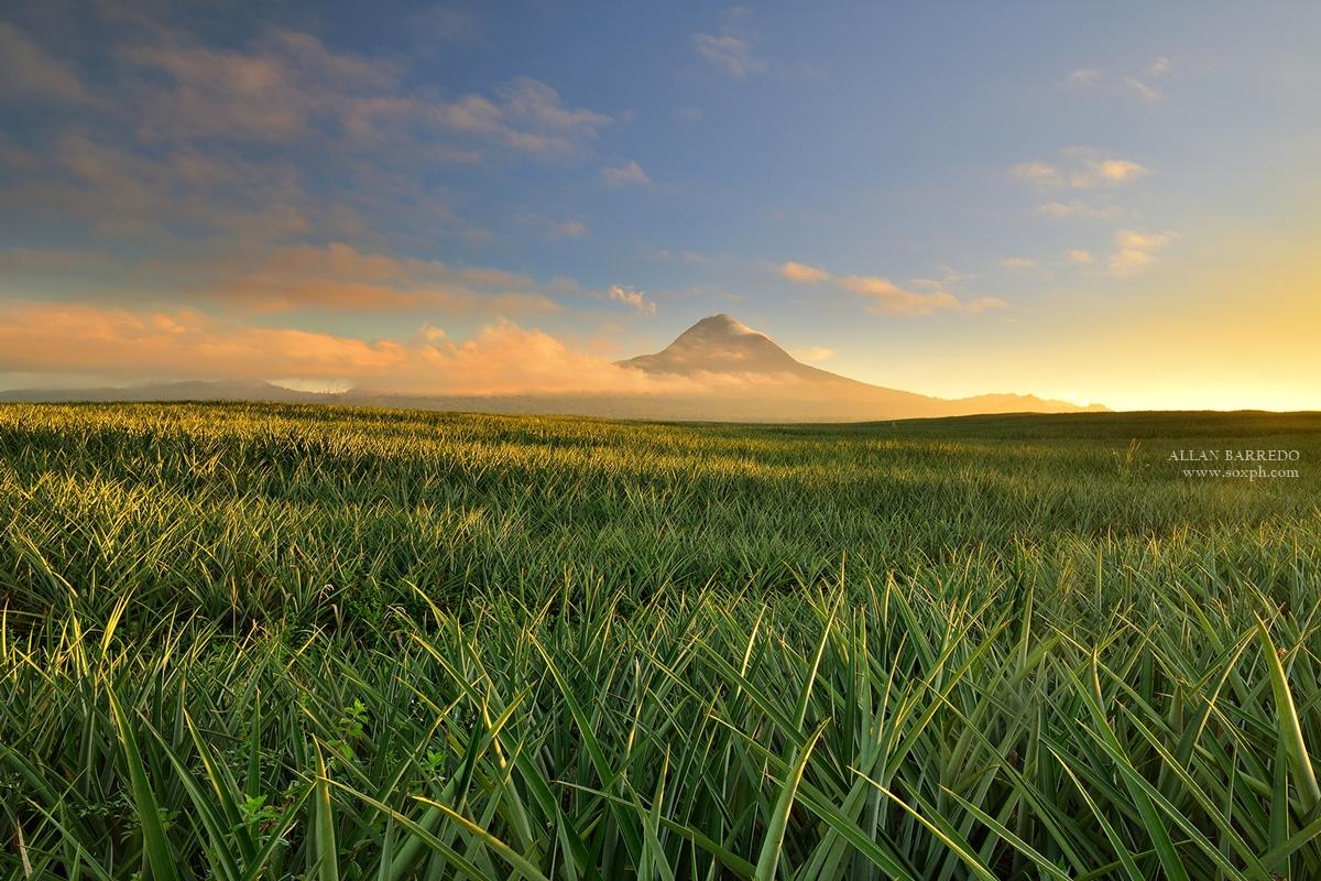 Mt. Matutum and Pineapple Fields