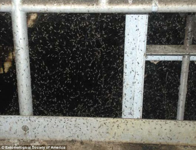More Than 100 Million Spiders Found Nesting Under An American City