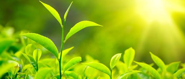 Plasticidad fenotipica en las plantas y biologia