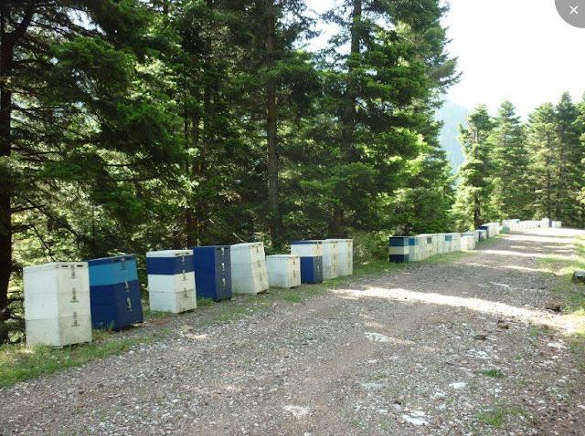 Ο Νίκος Μητσιώτης συμβουλεύει για τις αποστάσεις των μελισσιών από τους δρόμους και για τις φυλές των μελισσών