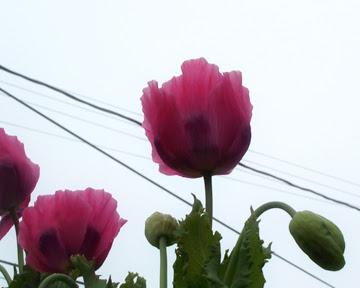 Best Flower Blog