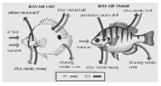 Osmoregulasi pada ikan air tawar dan ikan air laut