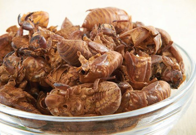 THUYỀN THUẾ - Petiostracum cicadae - Nguyên liệu làm Thuốc Ngủ, An Thần, Trấn Kinh