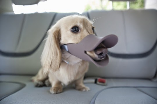 Awesome Dog Products and Gadgets (15) 2