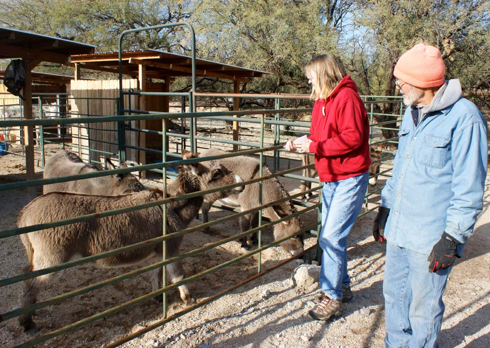 Gypsy Life Journal: Donkey Rescue and Cascabel