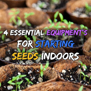 4 Essential Equipment's For Starting Seeds Indoors