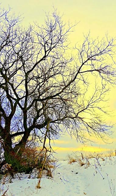 treesnowhalffx.jpg