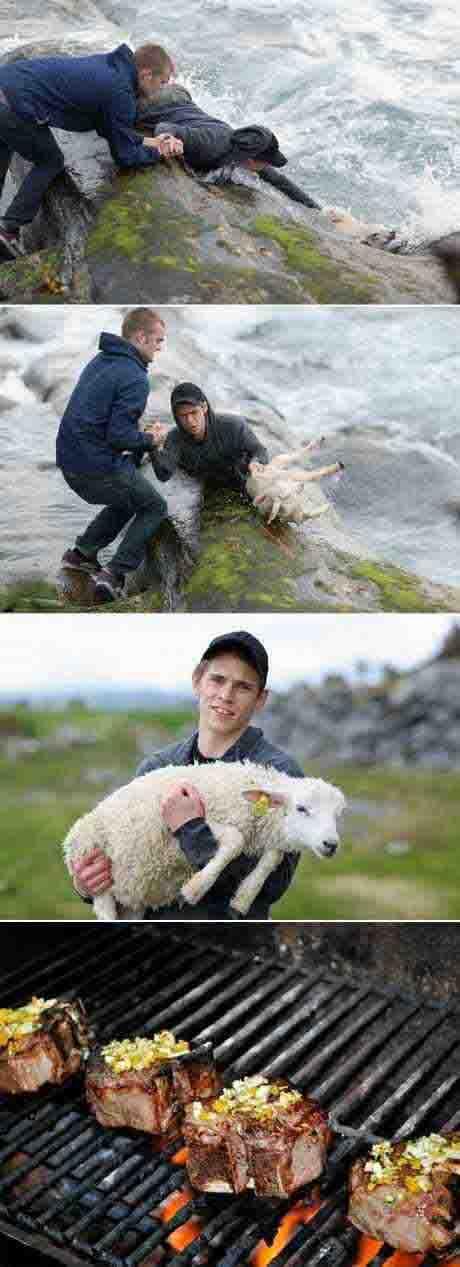 A triste história da ovelha