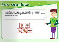 http://repositorio.educa.jccm.es/portal/odes/conocimiento_del_medio/5pc_elaparatoauditivo/