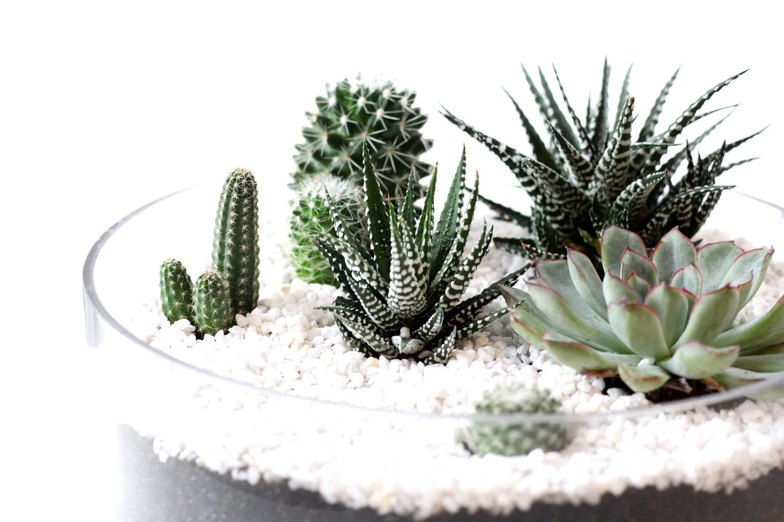 vergissmeinnicht mini succulent garden interior diy. Black Bedroom Furniture Sets. Home Design Ideas