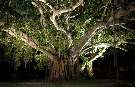 An Autobiography of a Banyan Tree