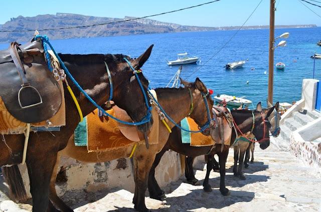 Passeio de mula pelas escadarias de Fira, Santorini