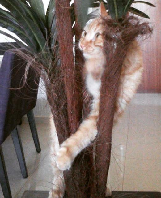 18 em mèo đang định âm mưu thống trị thế giới thì bị mắc kẹt