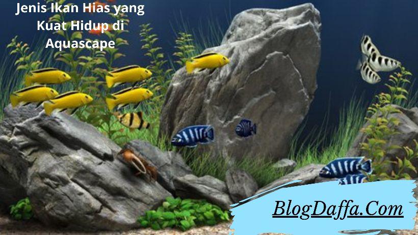 Jenis Ikan Hias yang Kuat Hidup di dalam Aquascape