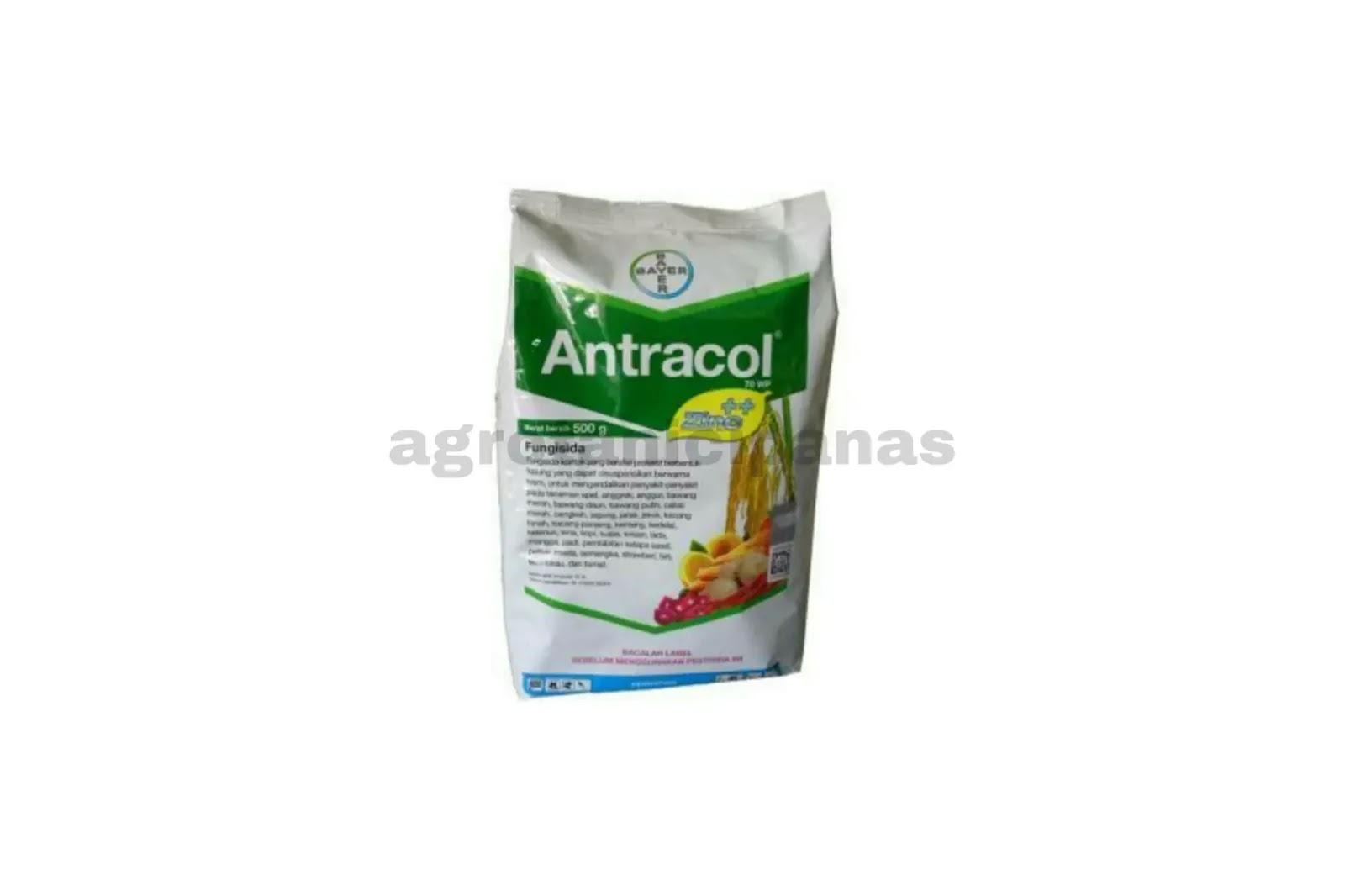 9 Manfaat Fungisida Antracol 70wp Untuk Mengendalikan Penyakit Jamur Berita Pertanian Mitalom