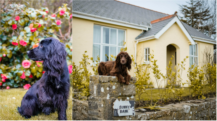 Visiting Pembrokeshire with Dogs
