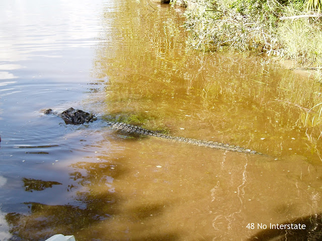 48 No Interstate: Our Favorite Highways:  US 1 - Everglades Alligator Farm, Florida