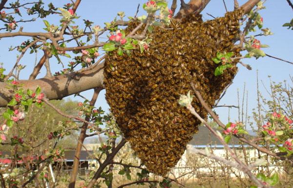 Μια περιπετειώδες μελισσοκομική ημέρα...