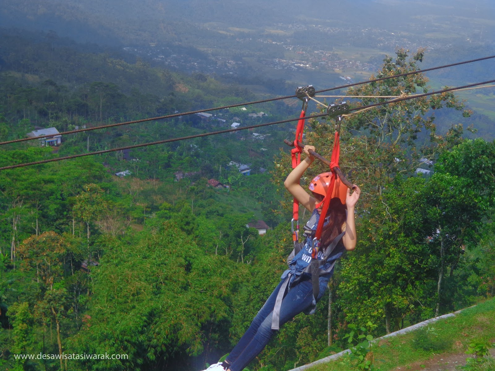 flying fox tertinggi
