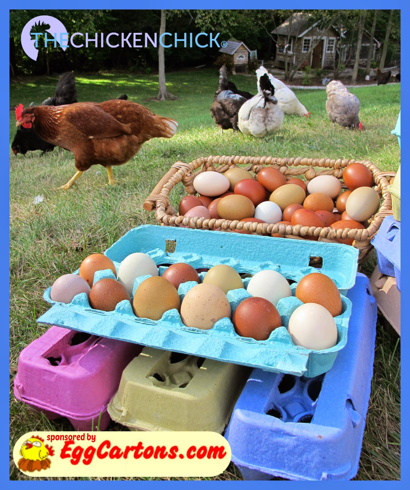 EggCartons.com and The Chicken Chick celebrate National Poultry Day March 19th with a Giveaway-palooza