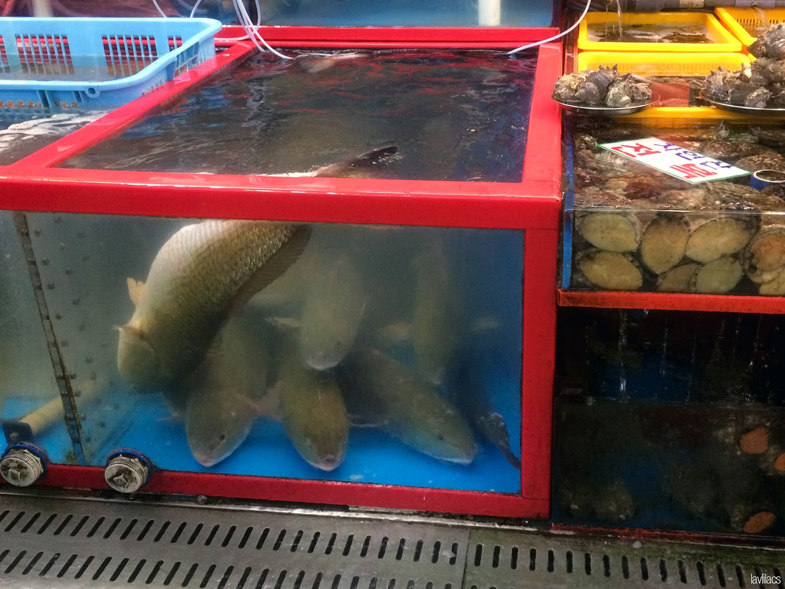 Seoul, Korea - Summer Study Abroad 2014 - Busan Jagalchi Fish Market