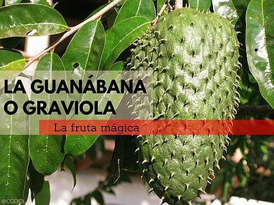 Nombres de la Guanábana o Graviola, Catuche o Catoche, Chirimoya Brasilera,...