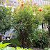 Gül Bahçemin Hikayesi
