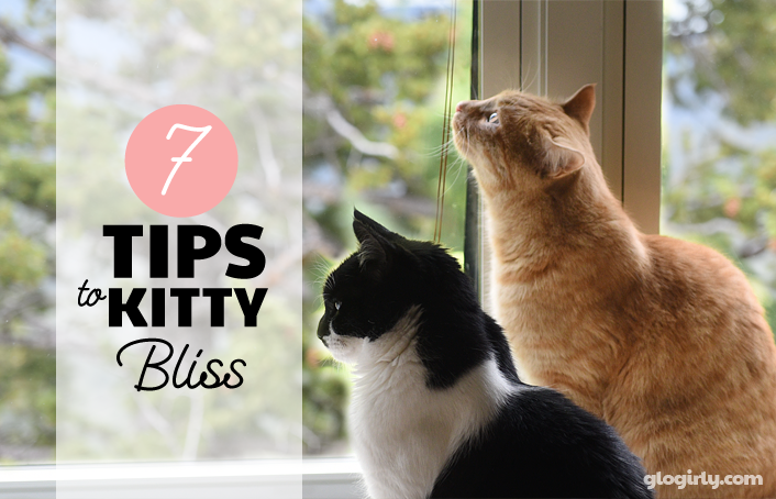 GLOGIRLY: 7 Tips to Kitty Bliss - De-Stress Your Pet Giveaway