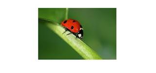 بحث حول الحشرات المفيدة أو الحشرات النافعة