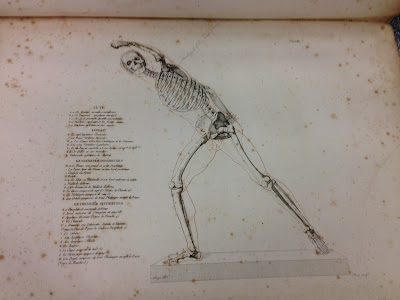 Image of skeleton from the book