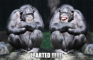 Funny Chimpanzee Image