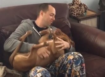 http://www.buzznova.club/2017/11/this-pit-bull-isnt-into-pda-and-also.html