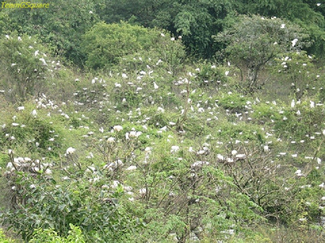 Birds of Gudavi Bird Sanctuary, Shimoga