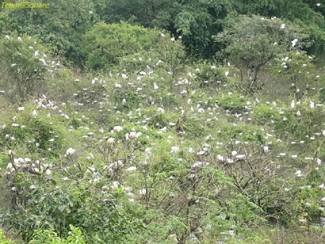 Birds of Gudavi Bird Sanctuary, Shimoga