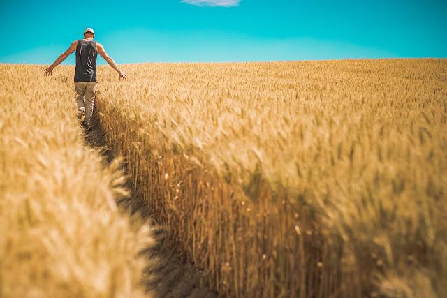 Μηνιαίο αγροτικό ημερολόγιο εργασιών
