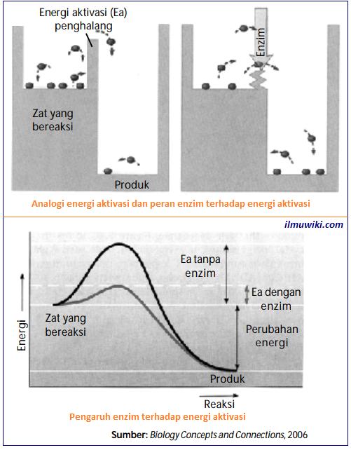 Pengertian dan sifat enzim lengkap
